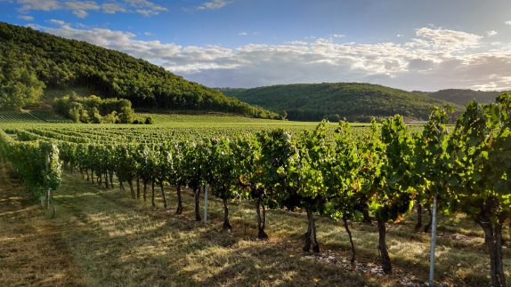 Cahors Vineyards - La Borie Gites Holiday Accommodation Dordogne Lot France